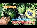 動画で家庭菜園『2018年6月…畑ダイジェスト!各野菜すでに収穫中です!』H30.6.22