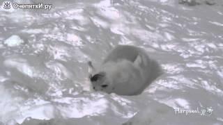 Трогательный морской котик