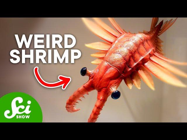 10 Strange-Looking Prehistoric Animals