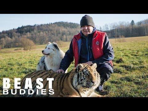 I Love My 600lbs Tiger   BEAST BUDDIES