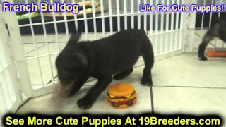 French Bulldog, Puppies, For, Sale In Toronto, Canada, Cities, Montreal, Vancouver, Calgary