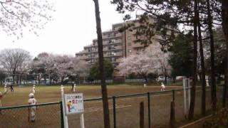 [2010-04-04]船橋市薬円台公園の桜祭り