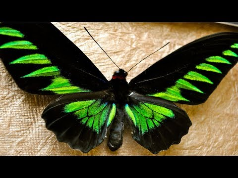 Video of MOST Beautiful Butterfly Nature at it's best●multiverse●MV●nature video compilation 2017