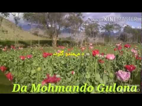 Dawizi Mohmand Agency