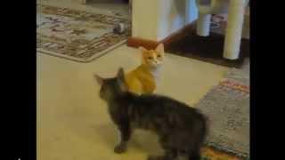 Gato vs Estátua