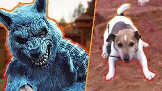 I HAVE SCARED MY DOGS! 😈 THEIR REACTION!
