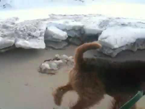 Frozen Falmouth Beach Dog Run