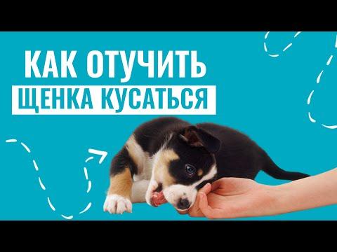 Вопрос: Как отучить щенка кусаться в два месяца?
