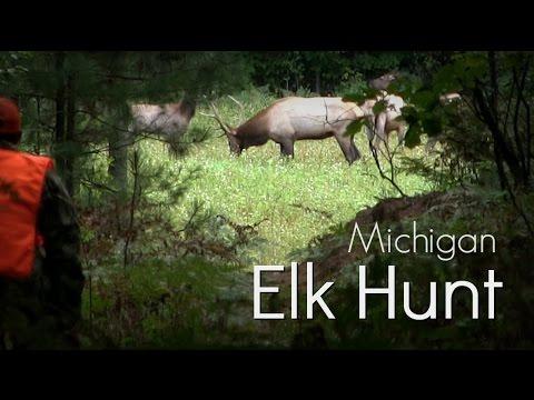 Michigan Elk Hunt On Public Land