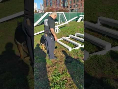 Police K9 Agility Course