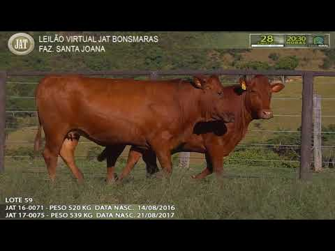 LOTE 059