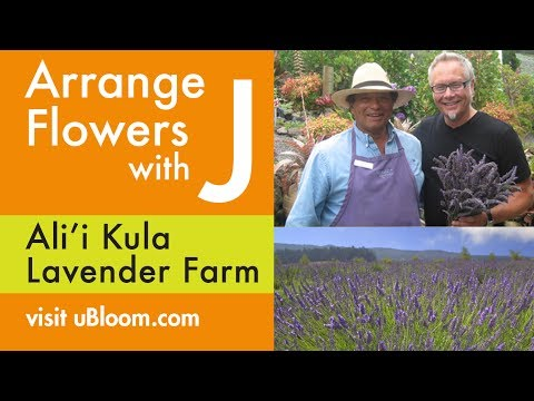 How to Arrange Lavender    on Location in Hawaii!