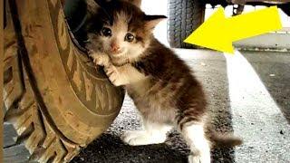 Mann findet verängstigtes Kätzchen unter LKW und kann einfach nicht nein sagen!