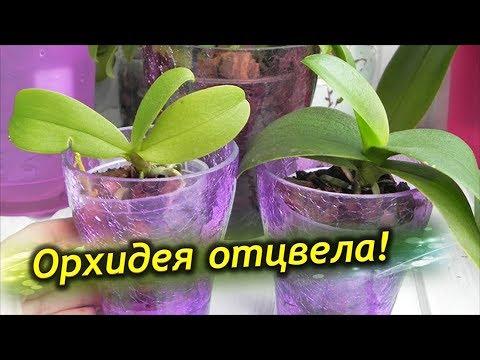 Орхидея ОТЦВЕЛА, что делать дальше с цветоносом? Уход после цветения!