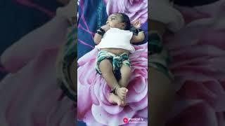Ente Shivani mol