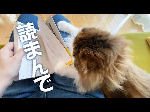 構って欲しいのにママが本を読んでいる時の猫の行動