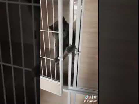 Cat Series: Cat is trying to escape from cage but then you have realized it....