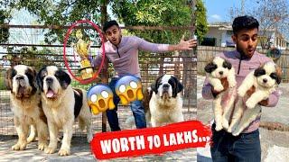 india's biggest dog farm