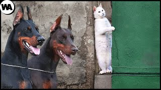 This Is Why Cats Hate Dogs