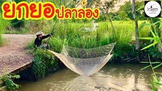 ยกยอ ฤดูปลาล่อง Fishing lifestyle Ep.139