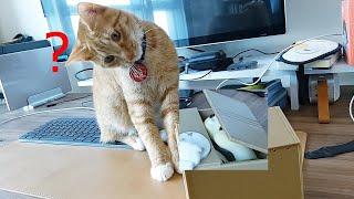 '도둑고양이 저금통'을 처음 본 고양이의…