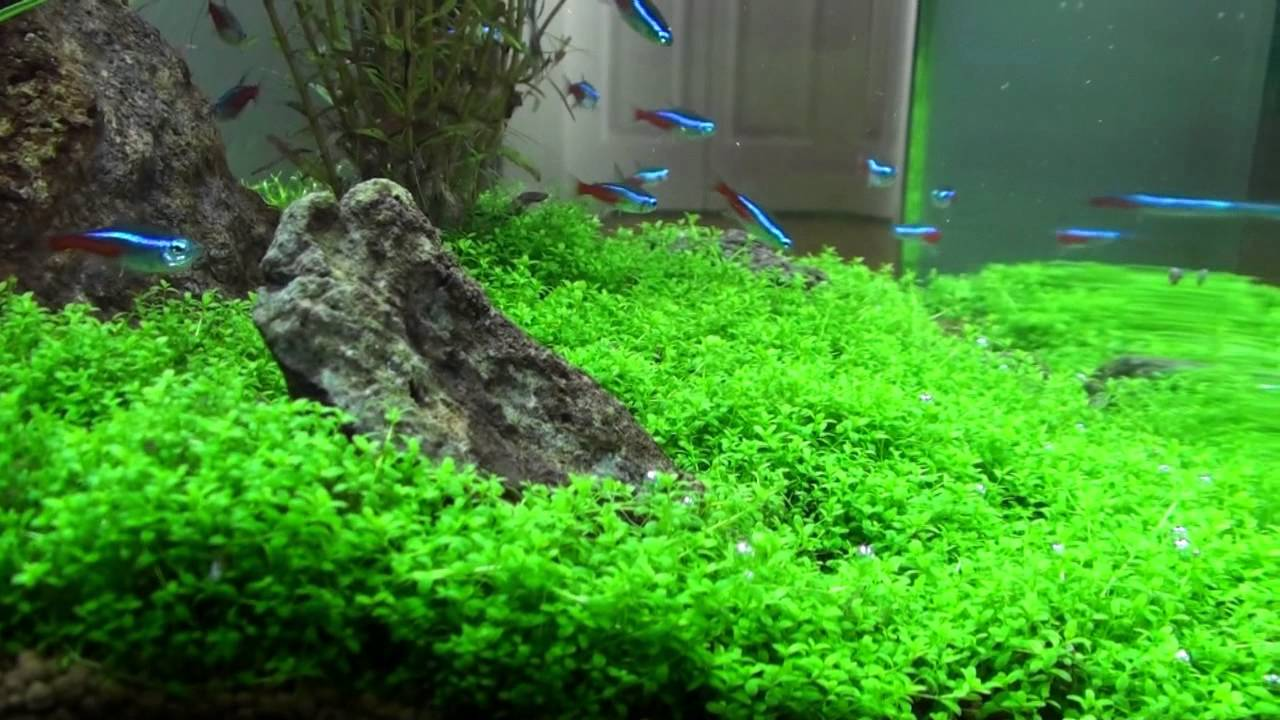 Amazing planted nano aquarium 14 gal biocube youtube for Plante nano aquarium