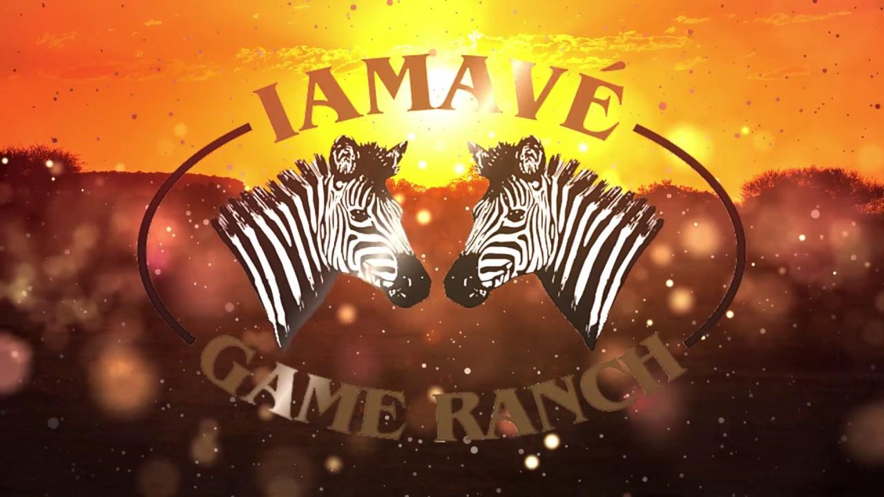 Iamavé Game Ranch Wildebeest Split Herd AGA - YouTube