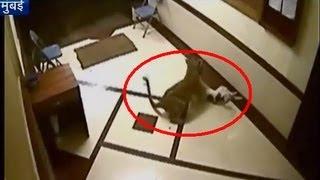 Must watch: Leopard enters Mumbai flat, carries away pet dog
