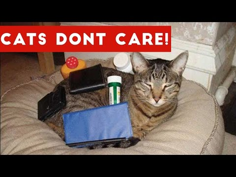 Thumbnail: Cats Don't Care Funny Pets Videos | Best Funny Cat Videos Ever