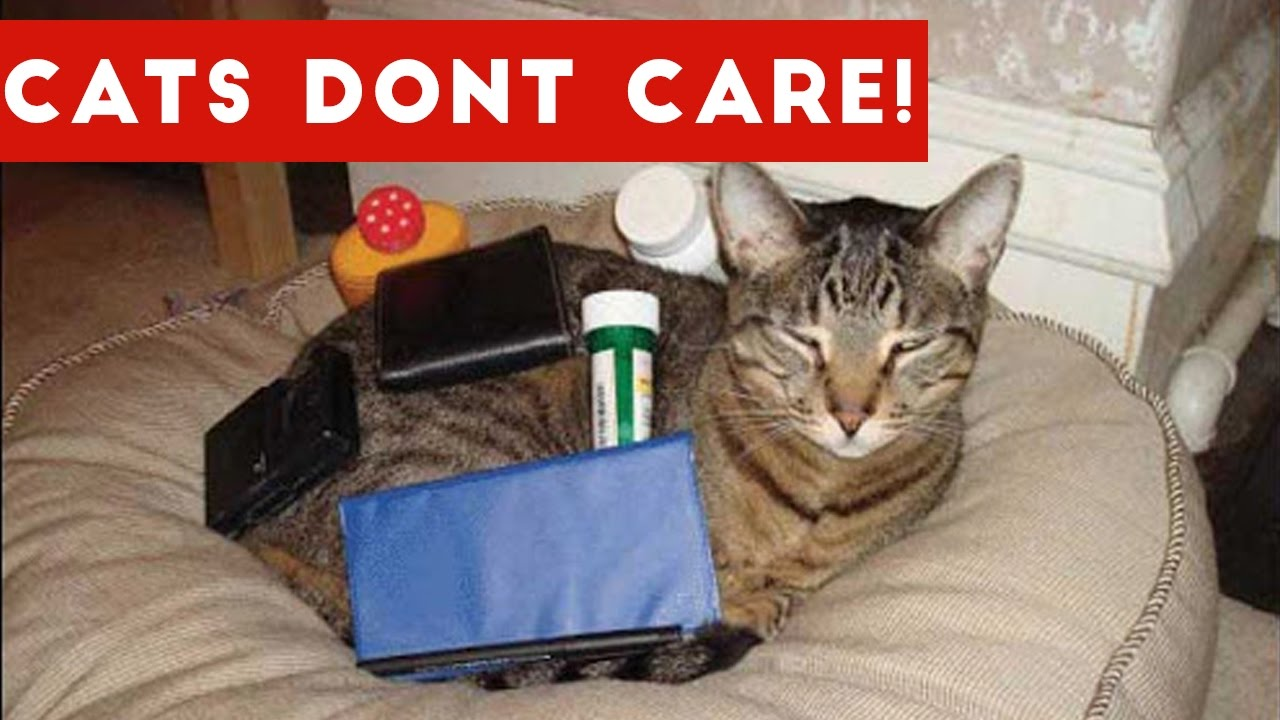Cats Don't Care Funny Pets Videos | Best Funny Cat Videos Ever
