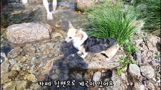 애견카페/남양주