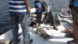 Lake Nasser fishing competition 2010 Egypt