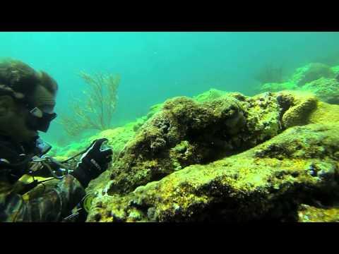 Fort Lauderdale Florida Scuba Dive