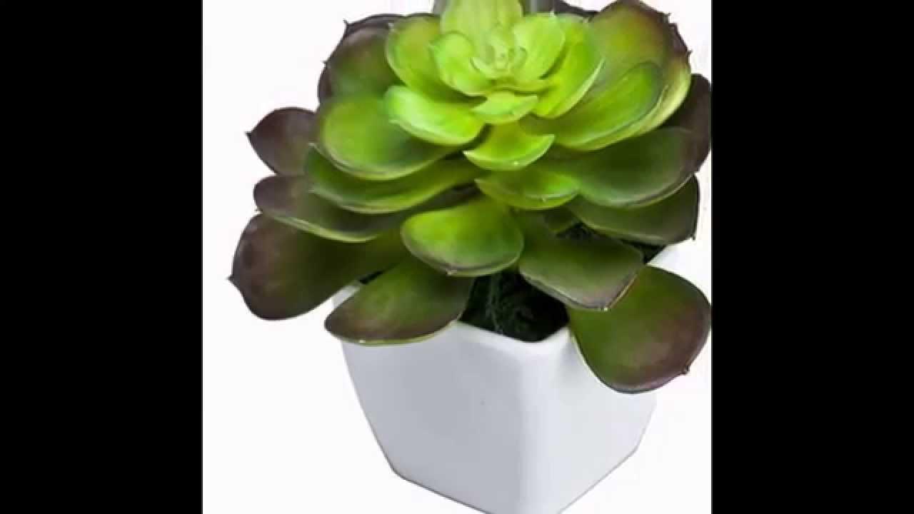 Artificial Cactus Collection Buy Artificial Cactus Plants Online
