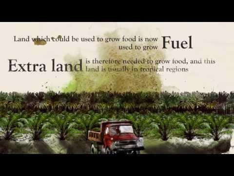 TRANSPORT & ENVIRONMENT - StopBadBiofuels