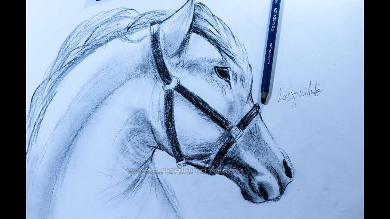 تعلم رسم حصان بقلم الرصاص How To Draw A Horse Youtube