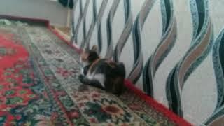 Кошка гадит что делать??