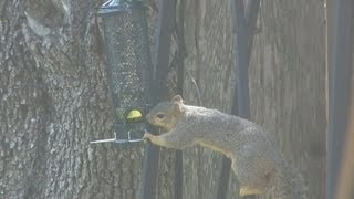Squirrel-proof Bird Feeder- Finally!