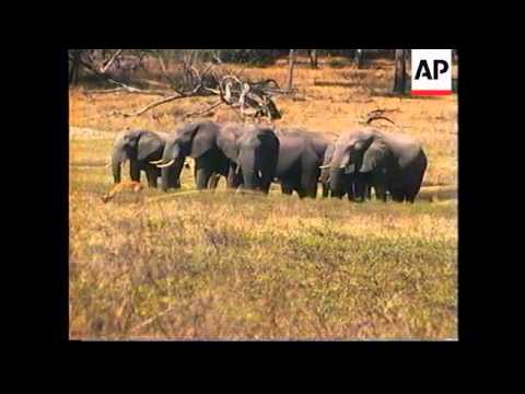 ZIMBABWE: GOVERNMENT KEEN TO GET BAN ON IVORY TRADE LIFTED