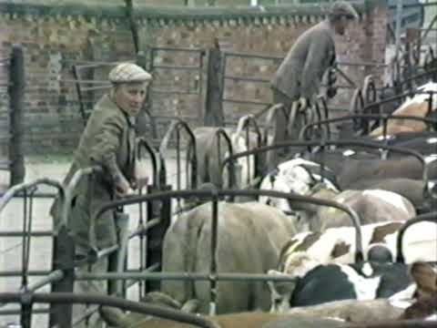 Cattle Market in Newark-on-Trent June 1988  part two