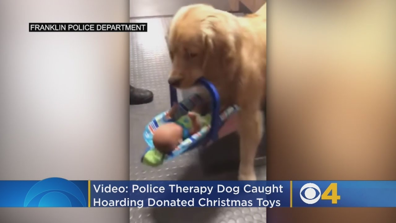 VIDEO: Police Therapy Dog Caught Hoarding Donated Christmas Toys