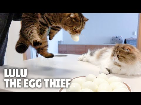 Can I Trust My Cats with Eggs? | Kittisaurus