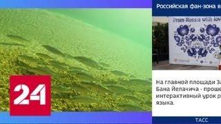 Мальки омуля к осени пополнят популяцию пресноводного лосося на Байкале - Россия 24