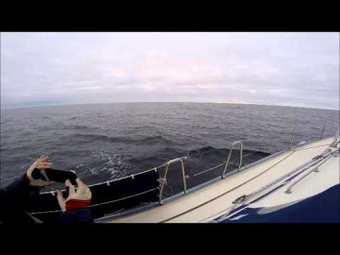 Whales in the Bay of Biscay