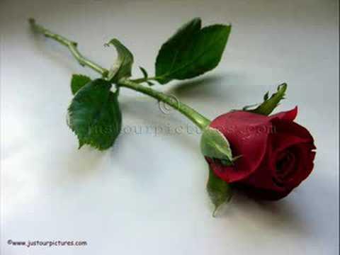 The Rose by Bette Midler [Lyrics]
