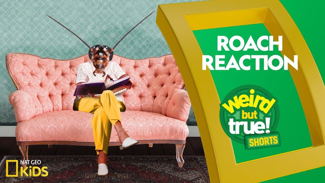 Roach Reaction | Weird But True! Shorts