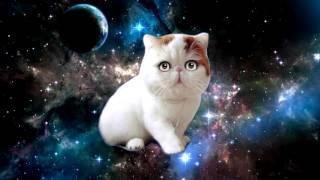 Поющая космическая кошка айм блю | Space cat sing a song eiffel 65 blue as Magic Fly