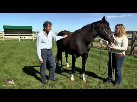 Pinnaclife Animal Health - Equine Dermatology Exam with Dr. Wayne Rosenkrantz