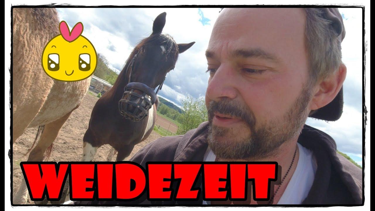 Weidegang - Frühling - Mineralstein FMA  Pferde Hoschi