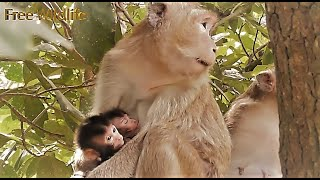 Wonderful Twin Baby Monkeys, Both are cute, Looking their face